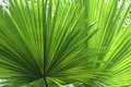 Tropical Leaf Detail Green Tex...