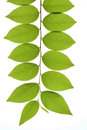 Tropical leaf nature plants and gardens green Stock Image