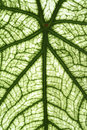 Tropical leaf nature plants trees Stock Photography