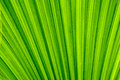 Tropical leaf texture background Royalty Free Stock Photo