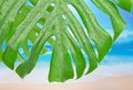 Tropical leaf with water drops against beach a Royalty Free Stock Photography