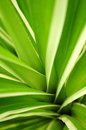 Tropical leaves Stock Photos