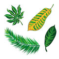 Tropical Leaves Collection. Is...