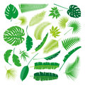 Tropical Leaves Collection, isolate vector. Big Set Royalty Free Stock Photo