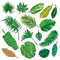 Tropical Leaves Collection, isolate vector.Big Set Royalty Free Stock Photo