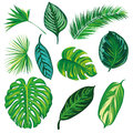 Tropical Leaves Collection, isolate vector. Set Royalty Free Stock Photo