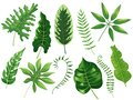 Tropical leaves. Exotic tropic leaf, botanic rainforest and tropics travel leafs painting cartoon vector isolated