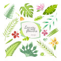 Tropical leaves flowers collection Royalty Free Stock Photo