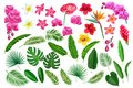 Tropical leaves and flowers