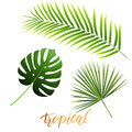 Tropical leaves of monstera, coconut palm, fan palm. Trendy palm leaves set.