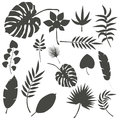 Tropical leaves palm summer exotic jungle green leaf vector illustration Royalty Free Stock Photo