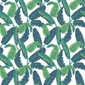 Tropical Leaves Seamless Pattern. Palm Tree Background