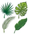 Tropical leaves set of four Royalty Free Stock Photo