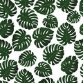Tropical leaves. Vector. Seamless pattern in swatch. Monstera wallpaper. Exotic texture with greenery hawaiian leaf