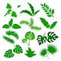 Tropical leaves vector set isolated on white background. Different green leaf collection. Jungle forest flora. Banana
