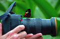 Tropical longwing butterfly perched on a camera lens Royalty Free Stock Images