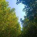 Tropical mangrove forest to prevent abrasion Royalty Free Stock Photo