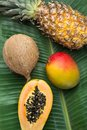 Tropical Nature Background Ripe Mango Papaya Coconut Pineapple on Large Green Palm Leaf. Healthy Food Lifestyle Vitamins