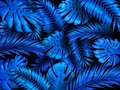 Tropical night background. Exotic blue rainforest leaves, indigo palm tree leaf and palms forest vector illustration. Royalty Free Stock Photo