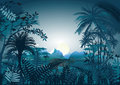 Tropical night the in a rainforest Stock Images