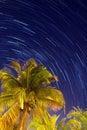 Tropical night Royalty Free Stock Photo