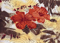 Tropical orange hibiscus for background. Royalty Free Stock Photo