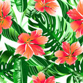Tropical orange and pink hibiscus flowers seamless pattern Royalty Free Stock Photo