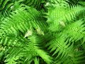 Tropical oriental ferns natural location in singapore Royalty Free Stock Photography
