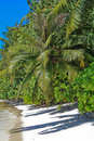 TROPICAL PALM BEACH Royalty Free Stock Image