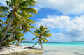 Tropical palm beach Royalty Free Stock Photos