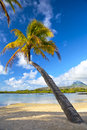 Tropical palm beach beautiful on in mauritius island Royalty Free Stock Image