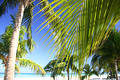 Tropical Palm Grove Stock Photos
