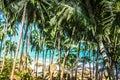 Tropical palm leaf with bokeh blue sky.