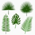 Tropical palm leaves, jungle leaf set isolated on white background. Exotic plants. Vector.