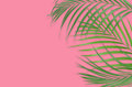 Tropical palm leaves on pink background. Minimal nature. Summer