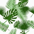 Tropical palm leaves seamless pattern, background with jungle leaf. Backdrop with exotic plants. Vector. Royalty Free Stock Photo