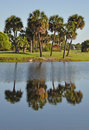 Tropical Palm Reflections Royalty Free Stock Photography