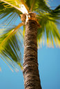 Tropical Palm Tree Royalty Free Stock Photo