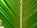 Tropical palm tree leaf Stock Photos