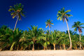 Tropical palm tree paradise Royalty Free Stock Photo