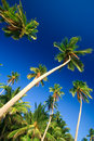 Tropical palm tree paradise Royalty Free Stock Photos