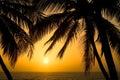 Tropical Palm Tree Sunset