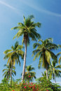 Tropical Palm Trees Stock Photos