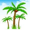 Tropical palm trees again sky