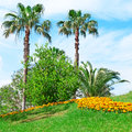 Tropical palm trees in a beautiful park Royalty Free Stock Image
