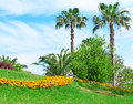 Tropical palm trees in a beautiful park Stock Image