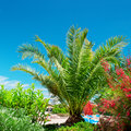 Tropical palm trees in a beautiful park Royalty Free Stock Photography