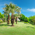 Tropical palm trees in a beautiful park Stock Photo