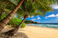 Tropical palms beach in Jamaica on Caribbean sea Royalty Free Stock Photo