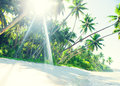 Tropical paradise beach with palm tree Royalty Free Stock Photos